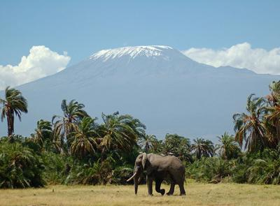 An elephant walks across a field in front of a large mountain covered in snow