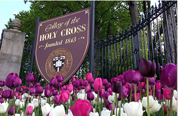 purple and white tulips in front of a wooden sign that reads college of the holy cross
