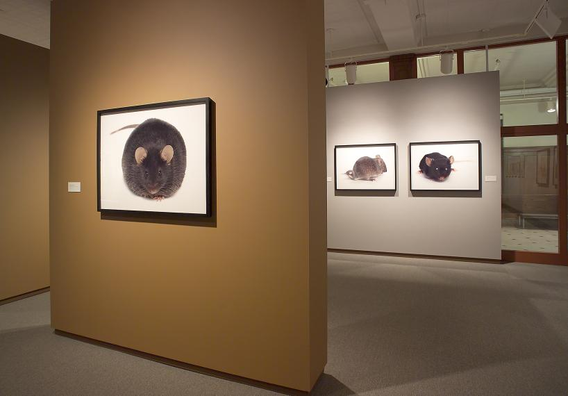 Photographs by Catherine Chalmers