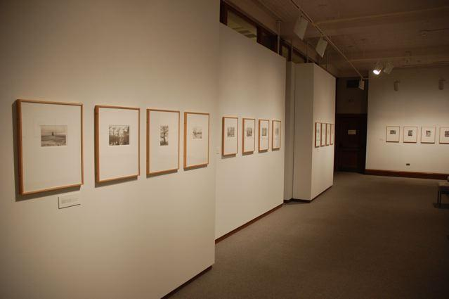 Tom Zetterstrom: Portraits of American Trees installation view